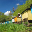 Experienced senior beekeeper working in apiary — Stock fotografie