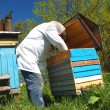 Experienced senior beekeeper working in apiary - Lizenzfreies Foto