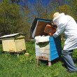 Experienced senior beekeeper working in apiary — Foto de Stock
