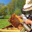 Experienced senior beekeeper working in apiary - ストック写真