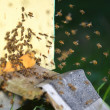 Plenty of bees at the entrance of beehive in apiary — ストック写真