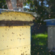 Beehive in apiary — Stock Photo