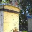 Stock Photo: Beehive in apiary