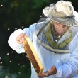 Experienced senior beekeeper making inspection in apiary after summer season — 图库照片