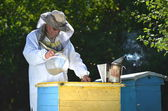 Experienced senior beekeeper pouring syrup into a feeder in apiary before winter season — Stock Photo