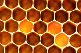 Natural honeycomb — Stock Photo