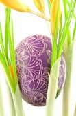 Traditional scratched handmade Easter egg among yellow crocus flowers — Stock Photo