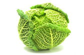Italian cabbage isolated on white background — Stock Photo