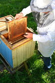 Experienced senior beekeeper making inspection in apiary — Stock fotografie