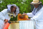 Two beekeepers making inspection in apiary in the springtime — Foto de Stock