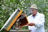 Senior beekeeper making inspection in apiary in the springtime — Stockfoto