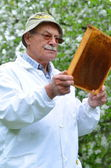 Senior beekeeper making inspection in apiary in the springtime — Stock Photo
