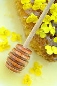 Delicious honey, honeycomb, delicate rapeseed flowers and honey dipper — Stock Photo