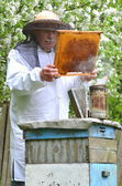 Senior beekeeper making inspection in apiary in the springtime — Zdjęcie stockowe