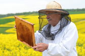 Experienced senior apiarist working in the blooming rapeseed field — ストック写真