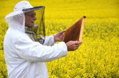 Experienced senior apiarist working in the blooming rapeseed field — Zdjęcie stockowe
