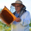 Experienced senior apiarist working in the blooming rapeseed field — Stock Photo #46820745