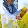Experienced senior apiarist working in the blooming rapeseed field — Stock Photo #46820781