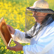 Experienced senior apiarist working in the blooming rapeseed field — Stock Photo #46820783