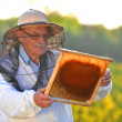 Experienced senior apiarist working in the blooming rapeseed field — Stock Photo #46820863
