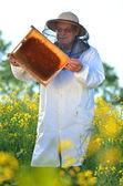Experienced senior apiarist working in the blooming rapeseed field — Stock fotografie