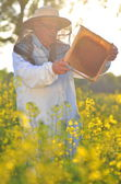 Experienced senior apiarist working in the blooming rapeseed field — Foto Stock