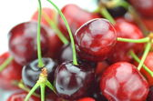Closeup of ripe, fresh and sweet cherries — Stock Photo