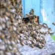 A swarm of bees at the entrance of beehive in apiary in the summertime — Stock Photo #50625043