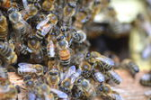 A swarm  of bees at the entrance of beehive in apiary in the summertime — 图库照片