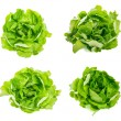 Collection Fresh lettuce salad leaves bunch — Stock Photo #34224651