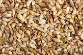 Utsho suneli seeds background — Stock Photo