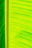 Banana leaf — Foto de Stock