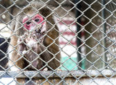 Monkey in cage — Stock Photo