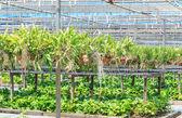 Orchid farm — Stock Photo