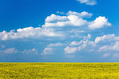 Yellow field on the background of blue sky — Stock Photo