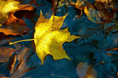 Yellow maple leaf on the ice — Stock Photo