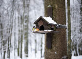 Nesting box under snow during the winter — Stock Photo