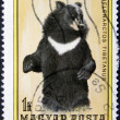 Bear on an post stamp — Stock Photo #23769217