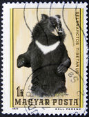 Bear on an post stamp — Stock Photo