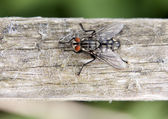 Picture of a fly — Stock Photo