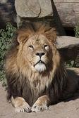 Dangerous african animal — Stock Photo