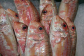 Pink fish — Stock Photo