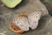Butterfly on a fruit — Stock Photo