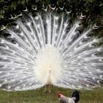 White bird — Stock Photo #34956485