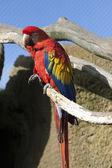 Colorful bird - — Foto Stock