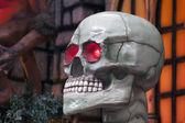 Skull — Photo
