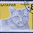 Постер, плакат: Cat portrait