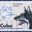 Dog on a post stamp — Stock Photo #37460013