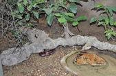 ядовитая змея — Стоковое фото
