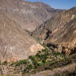 Oasis inside the colca canyon — Stock Photo